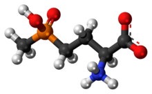 Ball-and-stick model of the glufosinate zwitterion