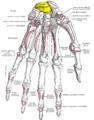 Gray219 - Lunate bone.png