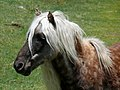 Grayson Highlands Ponies-27527-6.jpg