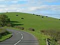 Grazing Cattle - geograph.org.uk - 258347.jpg