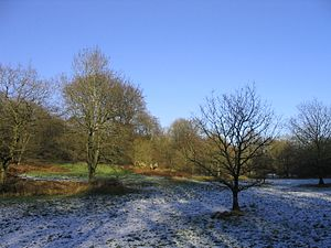 Savernake Forest - Winter scene at Great Lodge Bottom