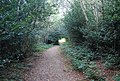 Greensand Way, Toy's Hill - geograph.org.uk - 1499368.jpg
