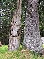 Gwaii Haanas National Park (27520041756).jpg
