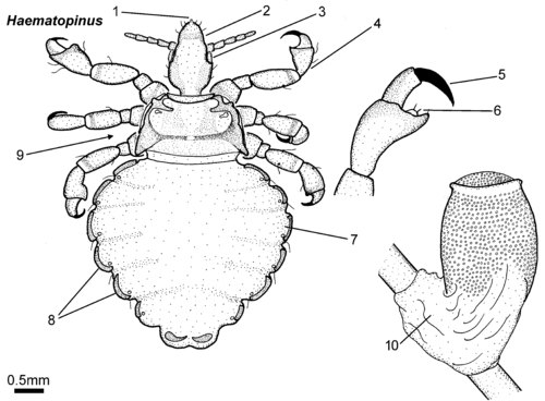 Parasitic Insects Mites And Ticks Genera Of Medical And Veterinary