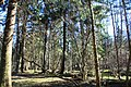 Hajnówka, Poland - panoramio (105).jpg