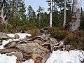 Harz near Bodebruch 07.jpg