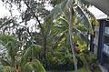 Heritage Park Hotel, Honiara (22699189341).jpg