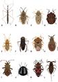 Heteroptera of Germany 1.png