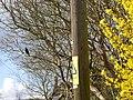 High voltage utility pole at Downton, Wiltshire.jpg