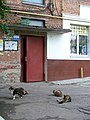 Himgorodok (Sumy, Ukraine) (27976621561).jpg