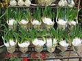 Hoa thuỷ tiên1.jpg