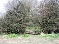 Hole in the hedge - geograph.org.uk - 751962.jpg