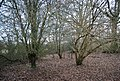 Horeman's Wood by the River line - geograph.org.uk - 1724075.jpg