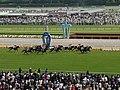 Horse racing @ Tokyo Race Course @ Fuchu (13934293850).jpg