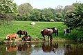 Horses - geograph.org.uk - 424403.jpg
