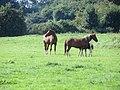 Horses at Yarwell - August 2013 - panoramio.jpg