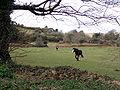 Horses in field near Nancledra - geograph.org.uk - 129662.jpg