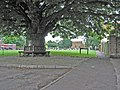 Hose Village Green, Leicestershire - geograph.org.uk - 32323.jpg