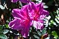 Hotel garden flowers (6996026015).jpg