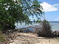 Indonesia (New Guinea Island)(38).jpg