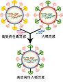 Influenza geneticshift zh-hant.jpg