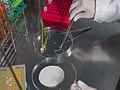 Inoculation des plantes avec des bactéries fixatrices d'azote et transfert dans les tubes stériles IJPB Versailles-20-clic (22726084947).jpg