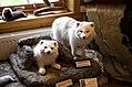 Inside Longyearbyen Skin shop (9506246391).jpg