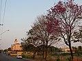Ipê roxo (Tabebuia avellanedae) e ao fundo a Igreja Matriz de São Sebastião na rua São Paulo, próximo ao Terminal Rodoviário em Pitangueiras. - panoramio.jpg
