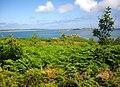Isles of Scilly, Tree Scheme, Innisidgen, St. Mary's - geograph.org.uk - 932153.jpg