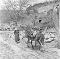 Israël 1948-1949; Peki'in. Druzische vrouw met een met hout beladen ezel. 255-0137.jpg