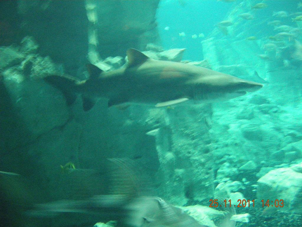 File:Istanbul Aquarium 46.jpg - Wikimedia Commons