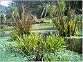 January Frost Botanic Garden Freiburg - Master Botany Photography 2014 - panoramio (6).jpg