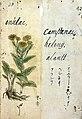 Japanese Herbal, 17th century Wellcome L0030072.jpg