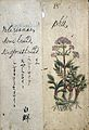 Japanese Herbal, 17th century Wellcome L0030104.jpg