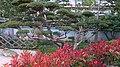 Japanese garden Monaco (topiary near the zen garden).jpg