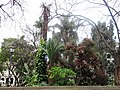 Jardim Municipal, Funchal - Apr 2013.jpg