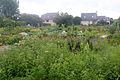 Jardin Ile aux idées IleTudy101.JPG