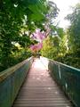Jardin des plantes montauban.png