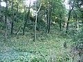 Jewish cemetery in Gdansk - panoramio - Sławek Zawadzki (4).jpg