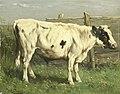 Jonge stier Rijksmuseum SK-A-1556.jpeg
