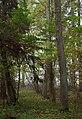 Joosu Waimel-Neuhof manor park 02.jpg