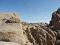 Joshua Tree Nationalpark Skull Rock Trail P4140434.jpg