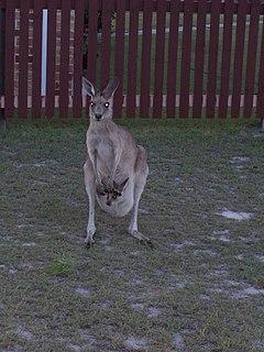 Woodgate, Queensland Town in Queensland, Australia