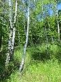 Kaniv Nature Reserve (May 2018) 61.jpg