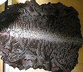 Karakul lamb fur skin.jpg