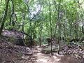 Kbal Spean - 004 Jungle Path (8583630261).jpg