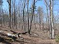 Kings Mountain National Military Park - South Carolina (8558873862) (2).jpg