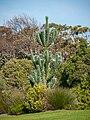 Kirstenbosch National Botanical Garden, Cape Town ( 1060047).jpg