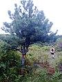 Kljevacko jezero - panoramio.jpg
