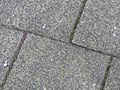 Knallerbsen an der Fördestraße beim Twedter Plack (Flensburg-Mürwik 2015-01-01), Bild 03.jpg